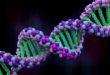 طرق لتخزين البيانات بواسطة الحمض النووي